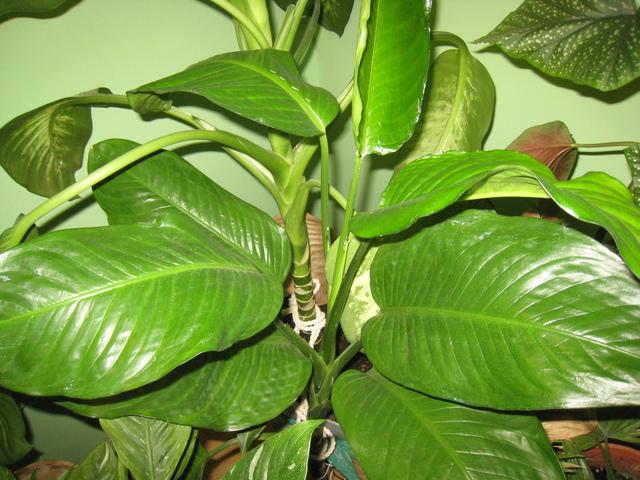 растения против паразитов организме