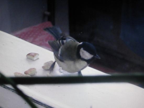 Птица залетела на балкон примета.