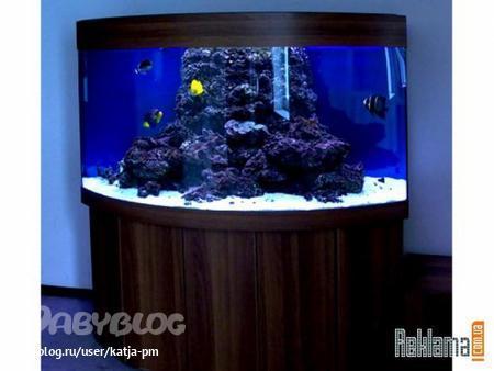 ...река. голландский аквариум. виды аквариумных рыбок фото.