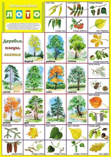 Дерева дуба картинки