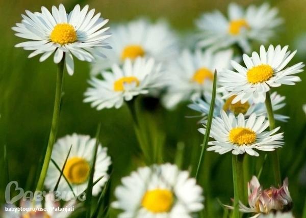 Песня самый красивый цветок
