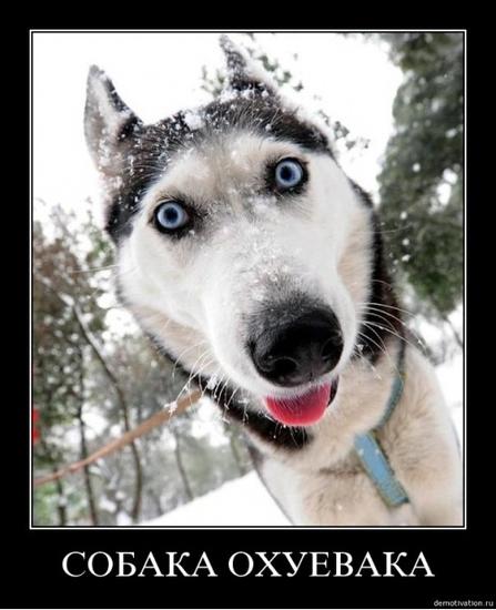 Портрет собаки в профиль  карточка пользователя