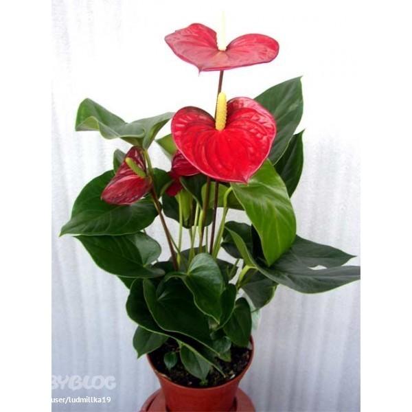 Мужское счастье цена цветок