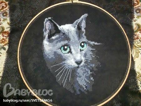 Вышивка котов на черной канве 80