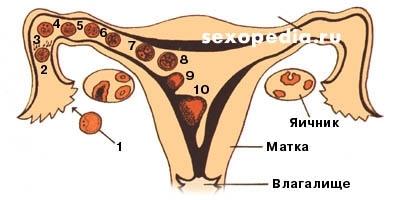 kak-podgotovit-spermu-dlya-zachatiya