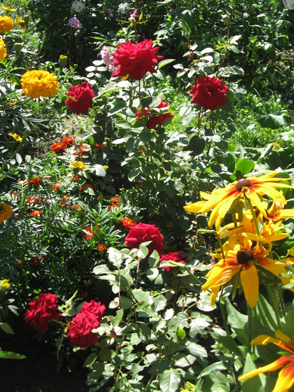 Выращивание розы на английском 31