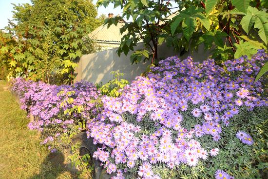 Какие цветы сажаем в июле 36