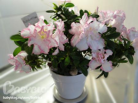 Домашние цветы которые любят тень