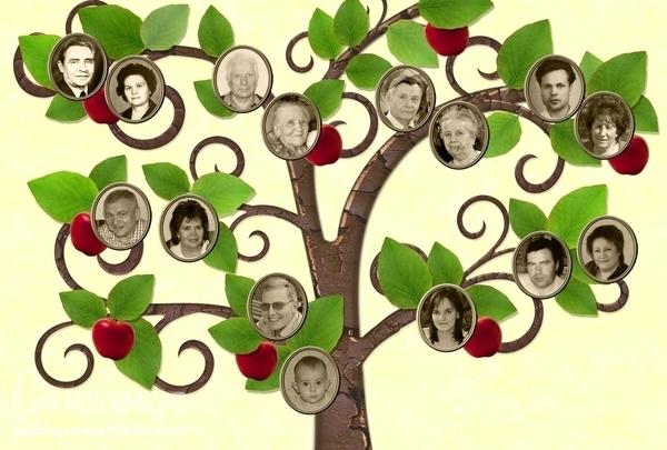 Нарисованные на Sfino: как нарисовать семейное дерево