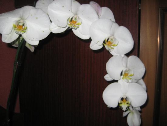 Пятна на цветах орхидеи лечение 70