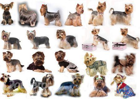 Собаки в Тюмени продажа с фото цены  купить щенка и