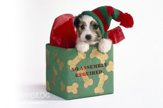 Фото животных с подарками